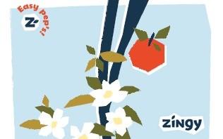Projet Zingy 1 soli