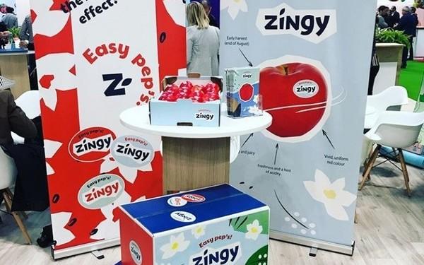 Projet Zingy 2 soli