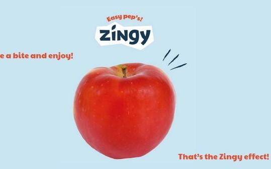 Projet Zingy 3 soli