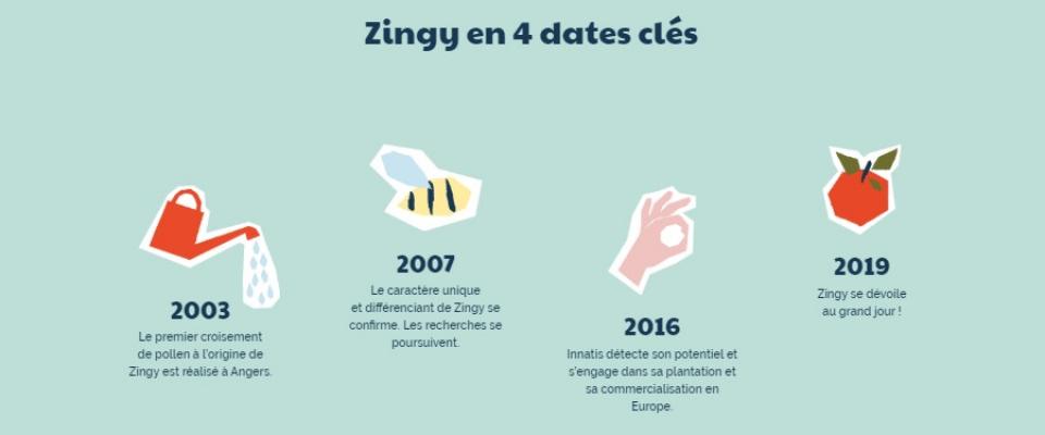 Site Zingy soli 3