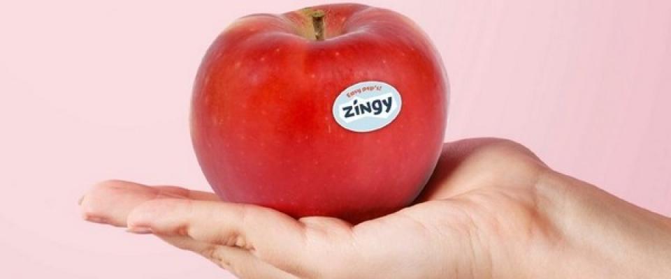 Zingy 1
